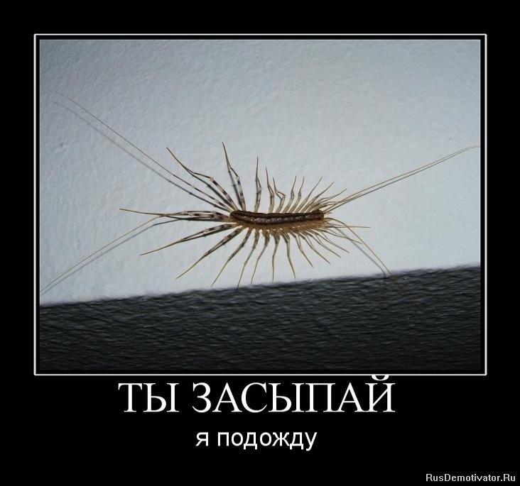 А это оказалась обыкновенная мухоловка.... | семена в Украине ...